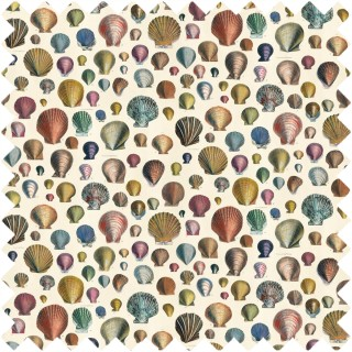John Derian Captain Thomas Browns Shells Fabric FJD6003/01