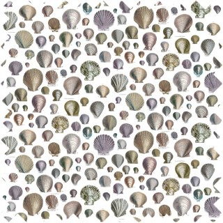 John Derian Captain Thomas Browns Shells Fabric FJD6003/02
