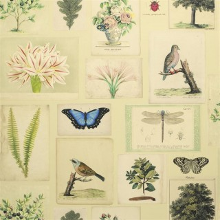 Flora And Fauna Wallpaper PJD6001/01 by John Derian