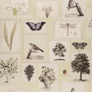 Flora And Fauna Wallpaper PJD6001/03 by John Derian