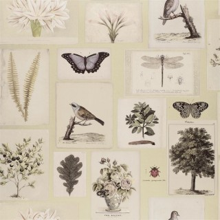 Flora And Fauna Wallpaper PJD6001/03 by John Derian