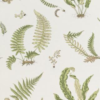 Ferns Wallpaper BW45044.10 by GP & J Baker