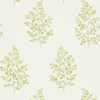 Angel Ferns Wallpaper 211998 by Sanderson