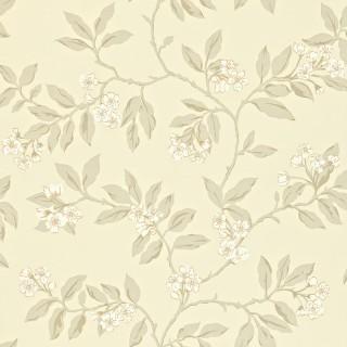 Blossom Bough Wallpaper 211994 by Sanderson