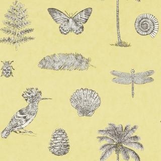 Cocos Wallpaper 213382 by Sanderson