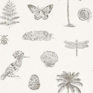 Cocos Wallpaper 213384 by Sanderson