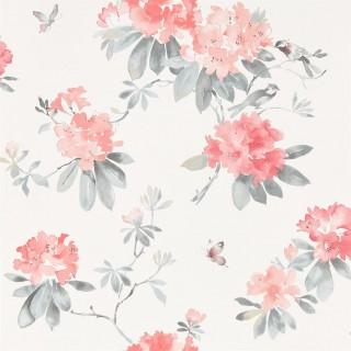 Rhodera Wallpaper 216264 by Sanderson